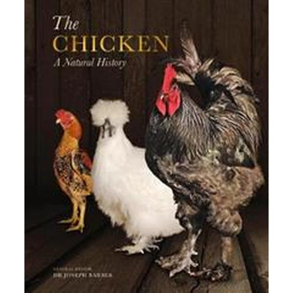 Chicken - a natural history